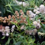 bumblebee - digital SLR - boris mozer 2018
